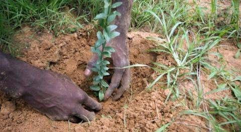 Lancement officiel de la semaine nationale de l'arbre au Tchad