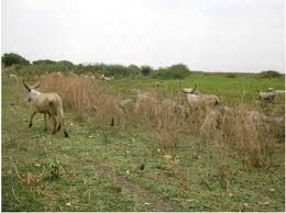 Un conflit agriculteur – éleveur fait 13 morts Bologo