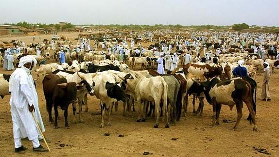 La FAO appuie la production de vaccins pour le cheptel au Tchad