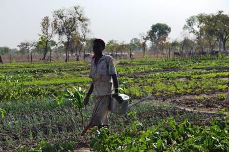 Publi reportage: Le projet d'urgence en faveur des réfugiés et retournés de la FAO apporte satisfaction