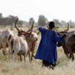 La vice-présidente de la Banque mondiale pour le développement humain, effectue une visite au Tchad 3