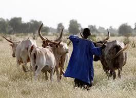 Trois morts dans un conflit éleveurs-agriculteurs