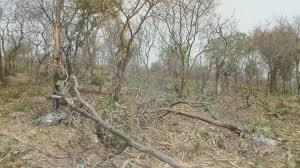 Le fond mondial pour l'environnement au chevet du lac Tchad 1