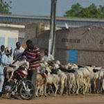 Djimte Guerimbaye décrypte le défi de la communication en Afrique 3