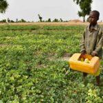 La Banque mondiale alloue 16,9 millions de dollars pour répondre à la pandémie de coronavirus au Tchad 3