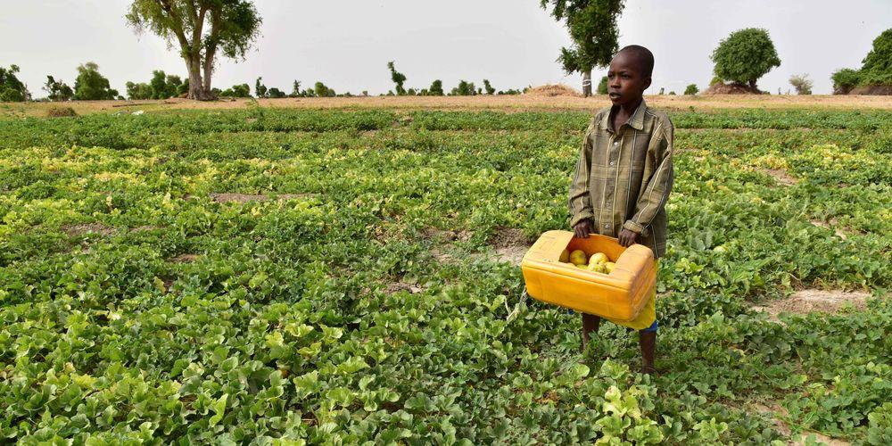 Nourrir l'Afrique malgré la maladie 1