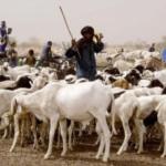 « En Afrique centrale, environ 42,7 millions de personnes sont en situation d'insécurité alimentaire et nutritionnelle » 2