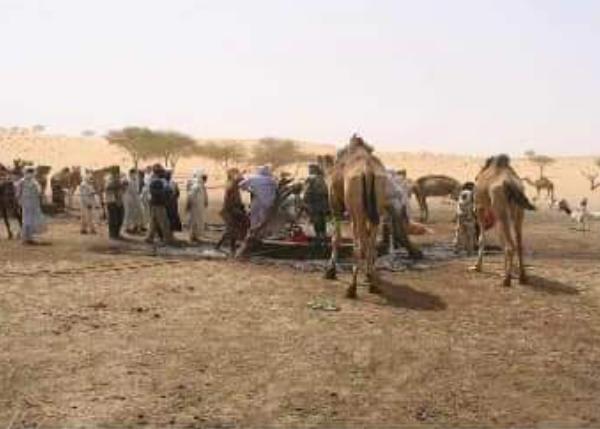 Des cadres du Kanem tirent la sonnette d'alarme sur le vol des dromadaires
