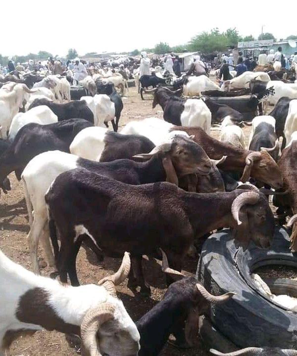 La fête de tabaski : trop des spéculations sur les prix des moutons