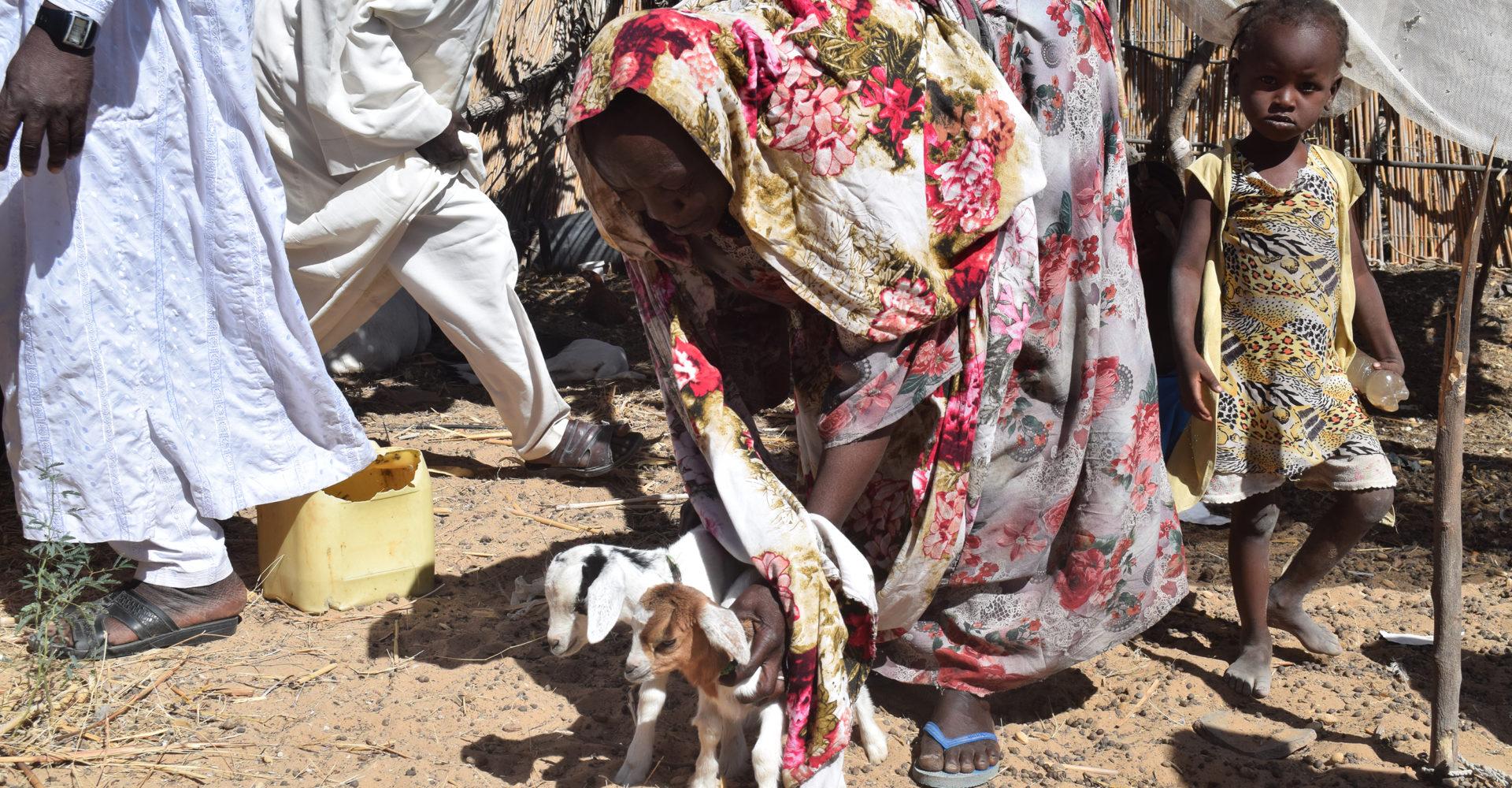 La Fao appui la population de Bol à la consolidation de la paix 1