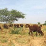 Le Tchad se dote d'une nouvelle Constitution 2