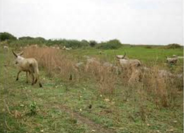 Deux morts dans un conflits agriculteurs -éleveurs à Kim 1