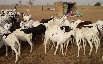 La Banque mondiale débloque 375 millions de dollars pour aider les pays du Sahel à exploiter pleinement le potentiel du pastoralisme