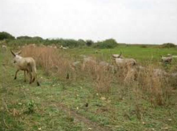 Une cinquantaine de morts dans un conflit près d'Am-timan
