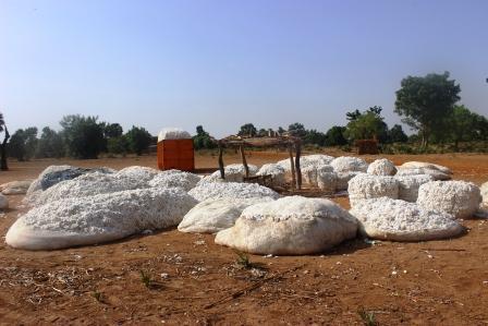 Le personnel de la Coton-Tchad SN en grève pour trois jours 1