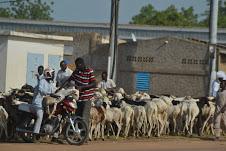 Les musulmans N'Djaménois se bousculent pour la Tabaski 1