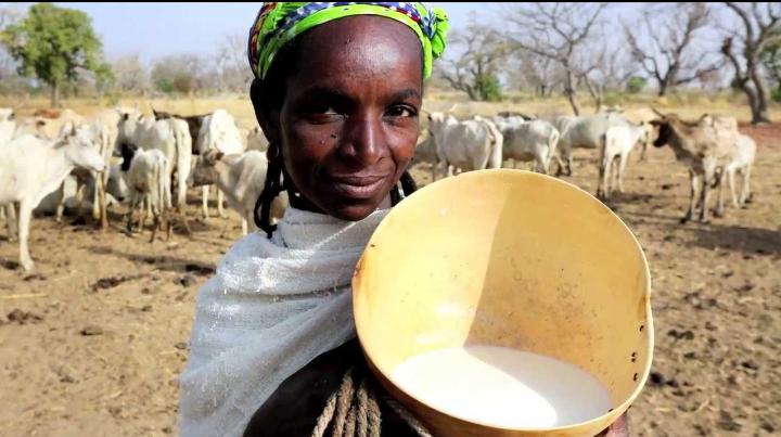 Menace sur le lait local, 55 organisations des producteurs sonnent l'alerte 1