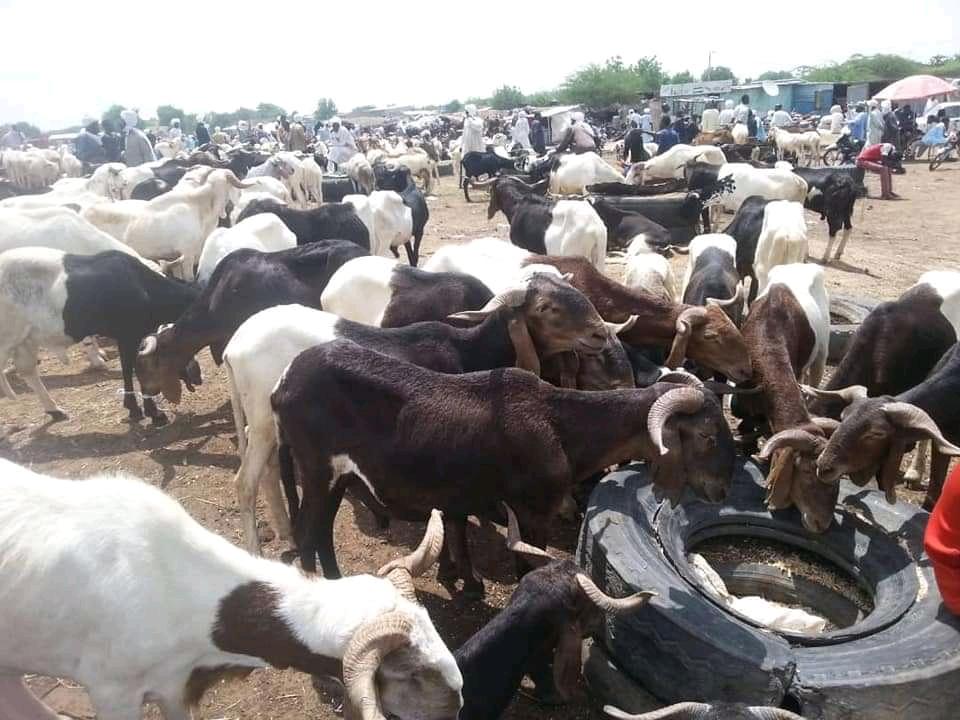 La fête de tabaski : trop des spéculations sur les prix des moutons 1