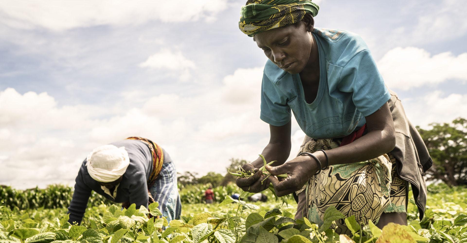 Une alimentation saine ne doit pas être un luxe pour les Africains 1