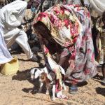 Quid du respect des mesures barrières dans les facultés de N'Djamena ? 3