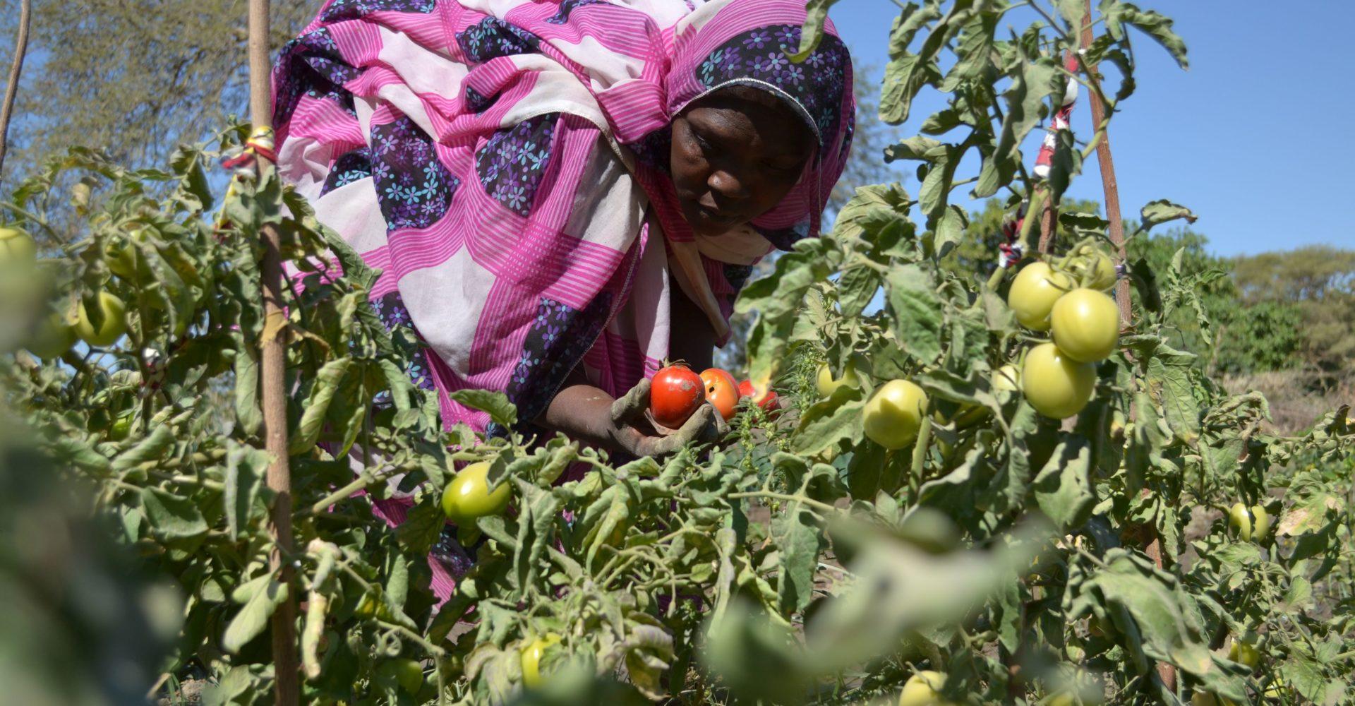 L'agriculture familiale écologique : un modèle durable et innovant pour une adaptation efficace aux changements climatiques au Tchad 1