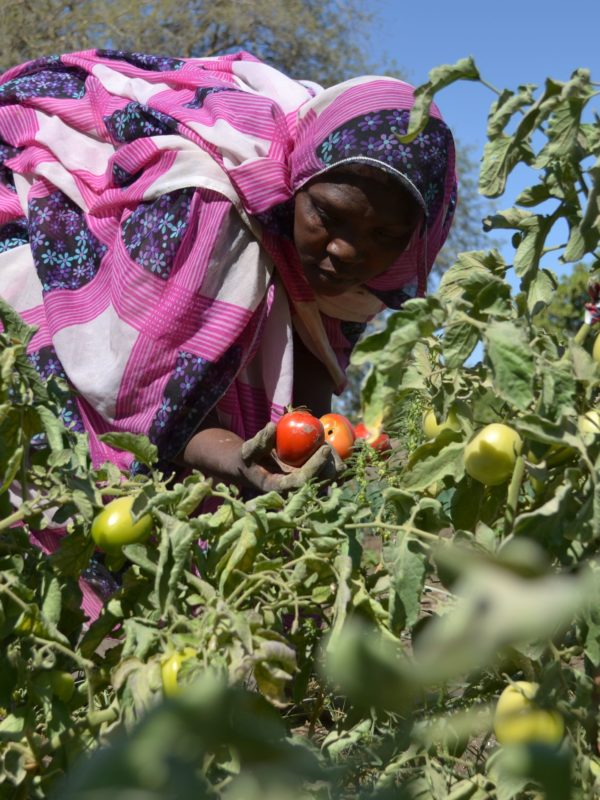 L'agriculture familiale écologique : un modèle durable et innovant pour une adaptation efficace aux changements climatiques au Tchad