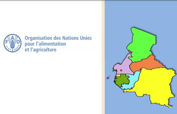 Ouverture ce mardi de la 13e réunion de l'Equipe Multidisciplinaire du Bureau Sous-régional de la Fao